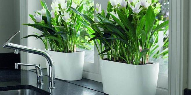 Как выбрать идеальный цветочный горшок для своего любимого растения за 5 минут