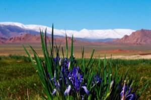 Что привести из Монголии