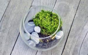 Террариум с растениями-4