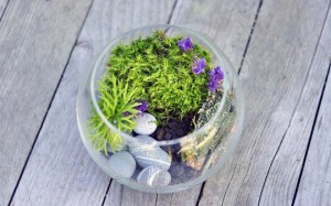Террариум с растениями-5
