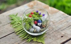 Террариум с растениями-9