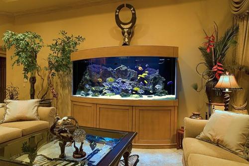 Как ухаживать за аквариумом в домашних условиях