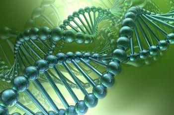 Коэнзим Q10 – польза и помощь организму