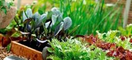 Какие виды растений растут в вашем зеленом уголке?