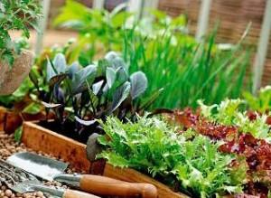 kakie-vidy-rastenij-rastut-v-vashem-zelenom-ugolke