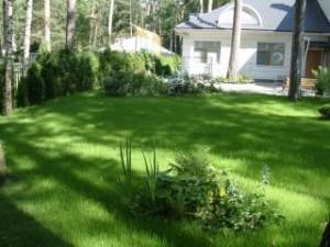 Лужайка у дома – как ухаживать
