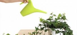 Виды удобрений для комнатных растений