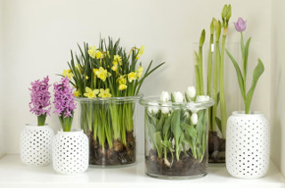 Как украсить дом с помощью живых цветов